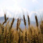 Corso base per patentino per prodotti fitosanitari.