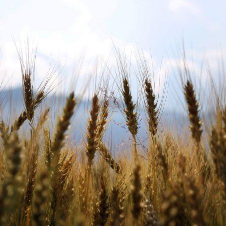 Patentino per prodotti fitosanitari – corso base